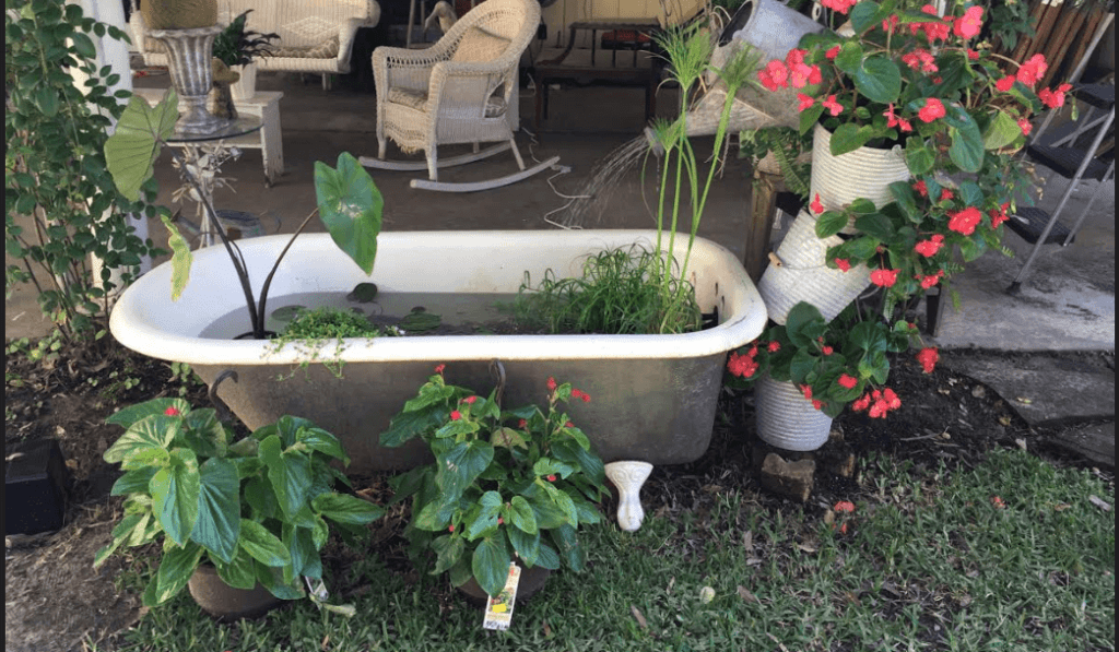 Claw-foot tub converted into Koi fish and water vegetation pond